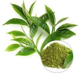 Rebnal Green Tea